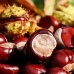 Chestnuts – Are They Treating Or Harmful?